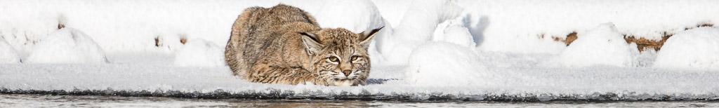 Yellowstone Winter Wildlife Workshop 2019 - No1