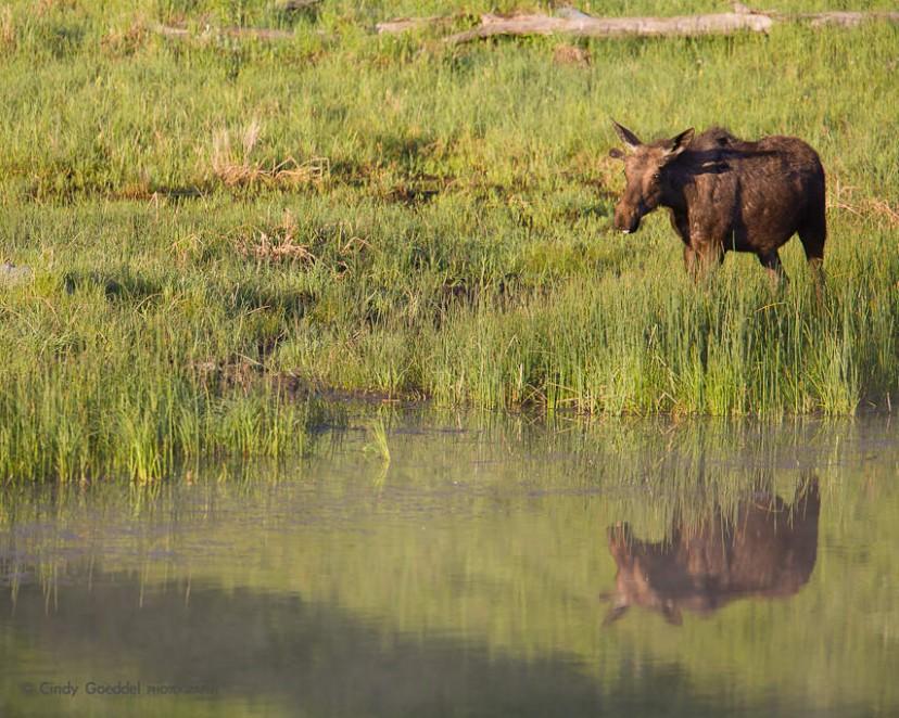 Moose Mirror
