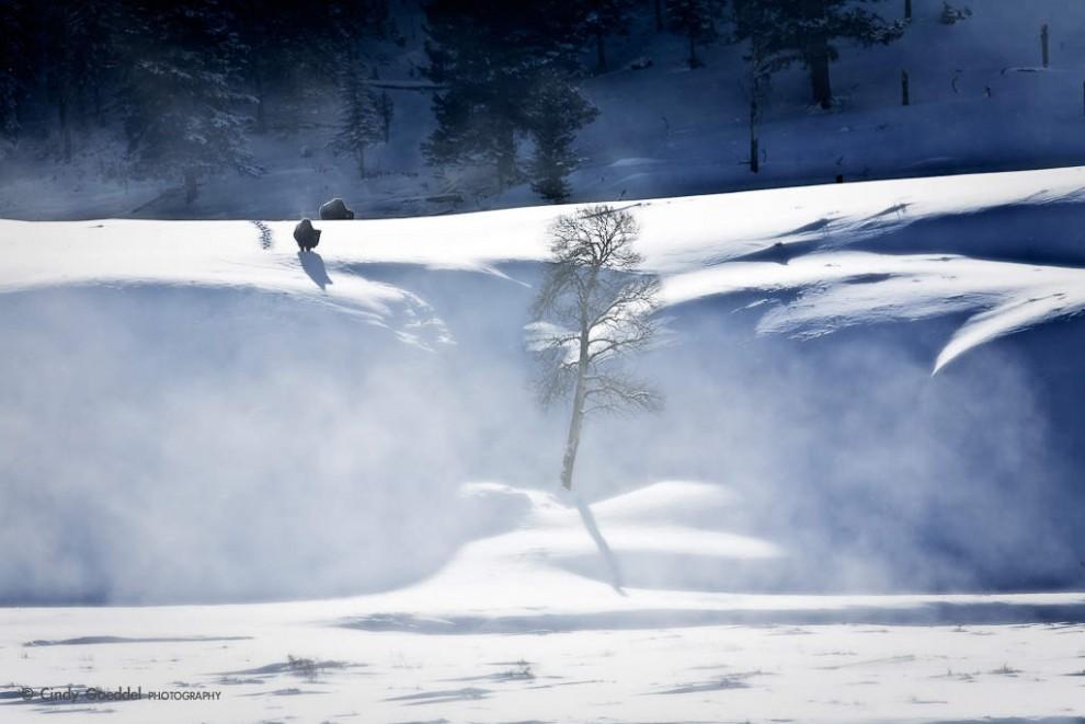Bison In Gound Blizzard