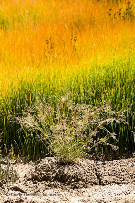 Mud Volcano Grasses