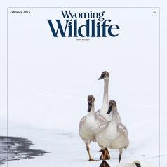 Wyoming Wildlife 2015 Photo Contest Cover