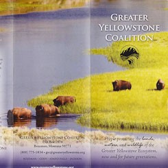 Bison Photograph by CIndy Goeddel for the Greater Yellowstone Coalition
