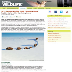 First Place 2016 National WIldlife - Mammal