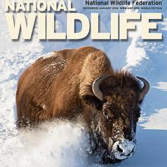 National Wildlife December 1015 Cover