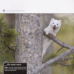 Back Cover: Greater Yellowstone Advocate 2012