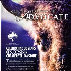 Greater Yellowstone Coalition-Cover Photograph Bison by Goeddel