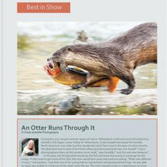 An Otter Runs Through it. Best in Show NANPA 2015 Showcase