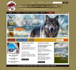 Yellowstone Wolves Shot - Greater Yellowstone Coalition