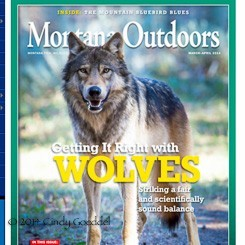 Montana Outdoors 2014 cover photograph of a wild Yellowstone wolf by Cindy Goeddel