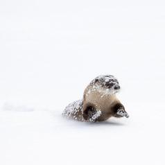 Romping River Otter