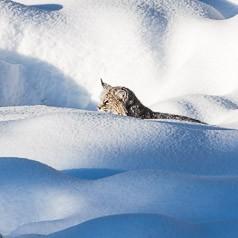 Snowy Stalk
