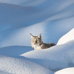 In the Snow Pillows
