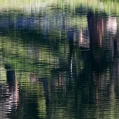 Treeline Reflections