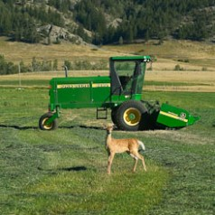 Deere and Deer
