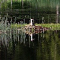 Floating SandhIll Nest and Crane