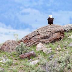 Bald Eagle Rock