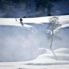 Bison In Ground Blizzard