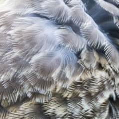 Feathers Abstract