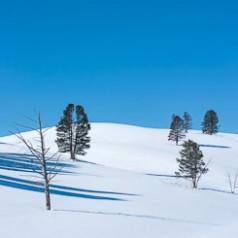 Hayden Valley Treescape