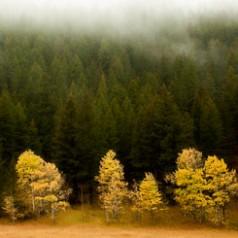 Fall Morning Fog