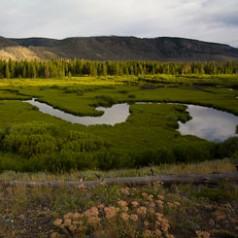 Wetland Dams