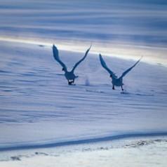 Sunrise Ice Dance