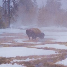 Misty WInter Morning along Rabbit Creek