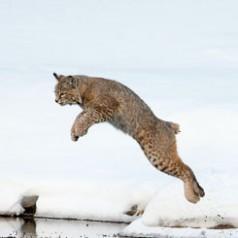 Leap of Faith 1