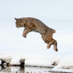 Leap of Faith - 2