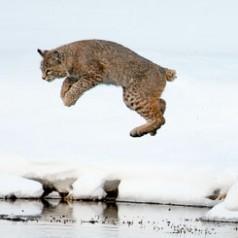 Leap of Faith - 3